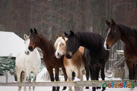 BIO uležan konjski gnoj