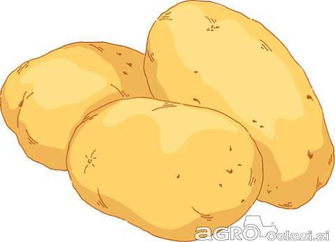 Krompir in fižol