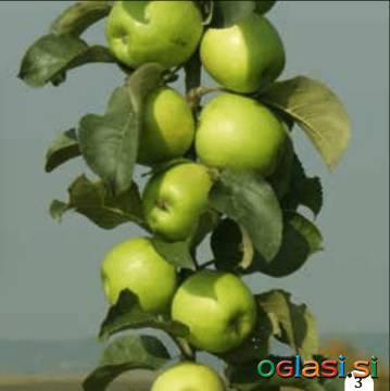 Plant Garden (www.plant-garden.si) - spletna prodaja sadik